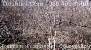 Рязане на храсти и косене на трева в Пловдив